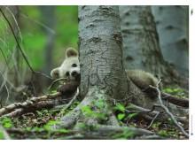 """Plakat z serii """"Opowieści z serca Tatr"""" – niedźwiadek (B2)"""